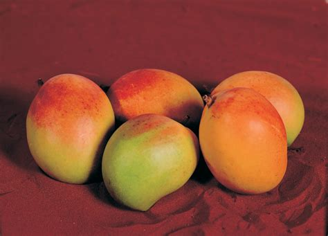 fruit trees for sale perth growing mangoes in cooler areas of western australia