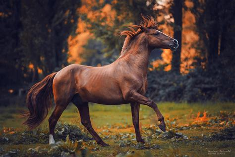 how long do horses live fact about horses and the