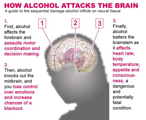 Can Detox Cause Brain Damage by How The Weekend Can Effect Your Brain Siowfa14 Science
