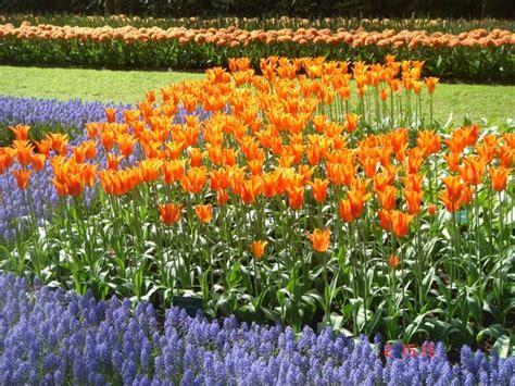ci di fiori olanda olanda in fiore viaggi vacanze e turismo turisti per caso