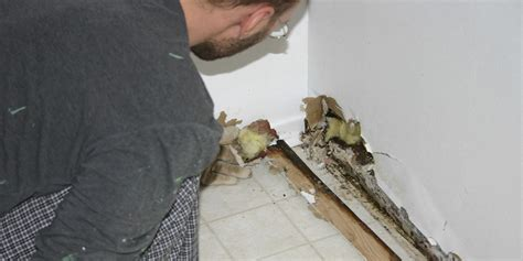 of mice and mold 40 of american homes health