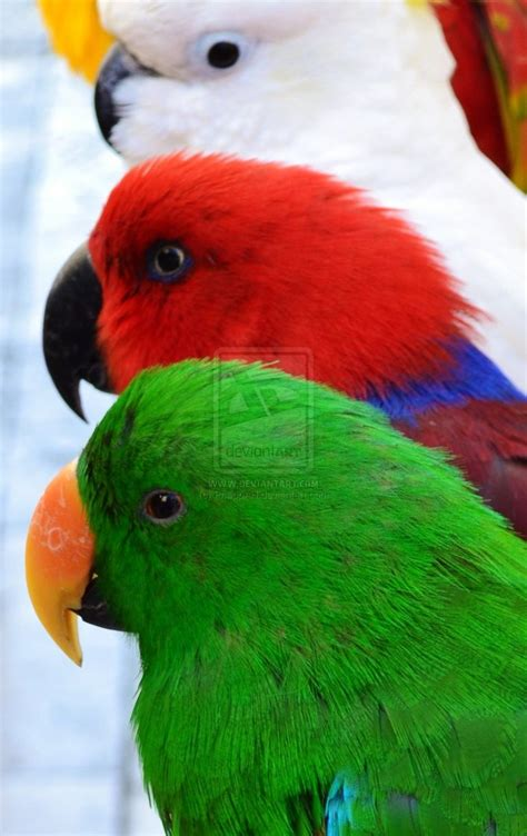 colorful parrots pin colorful parrot on