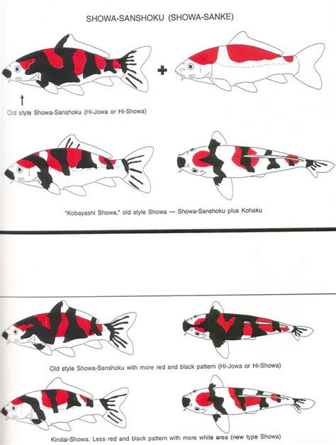 koi fish color meaning chart pin koi chart on