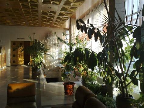 plant layout of hotel tropical plants in the lobby of the hotel rossiya help