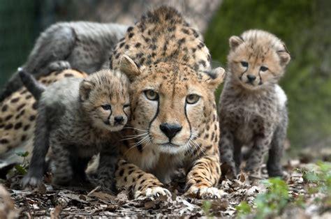 burgers zoo arnhem verzorgd groepsuitje vanaf  personen