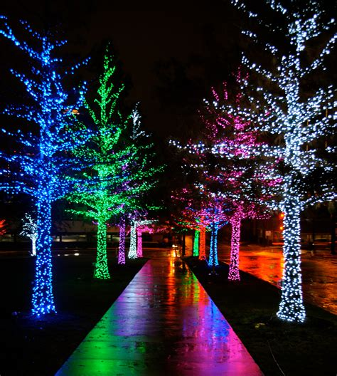 holiday color christmas lights winter wonderland night