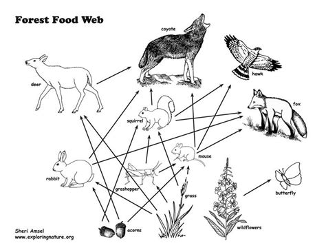 coloring pages of food webs food web colouring pages