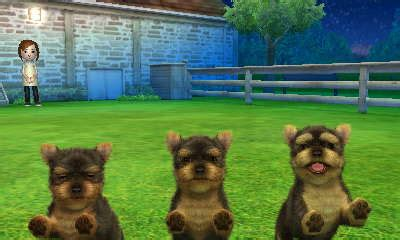 yorkie and cats terrier nintendogs cats club wiki