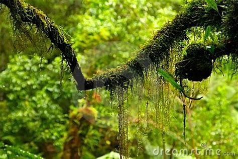Moos Wachsen Lassen by H 228 Ngende Moose Bepflanzung Terrarien Terraon De
