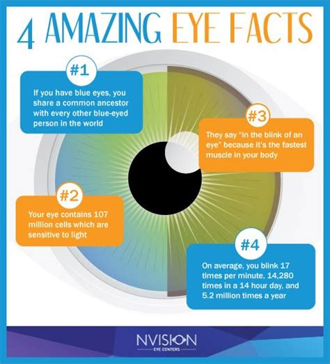 facts about eye color 4 amazing eye facts from nvision eye centers