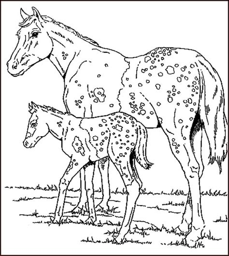 coloring pages exotic animals animal coloring pages coloring pages exotic animals