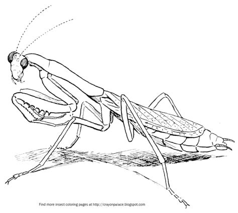 praying mantis change color praying mantis coloring page crayon palace