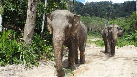 Phuket Elephant Sanctuary treads new ground | CNN Travel