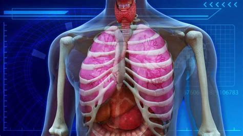 Does Marijuana Affect Detoxing From Parasites by How Does Affect Your Lungs How To Clean Out Your