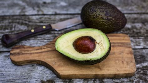 is avocado bad for dogs 10 foods that are bad for dogs dogtime