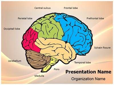 34 Best Images About Brain Powerpoint Templates Human Brain Powerpoint Template On Pinterest Brain Ppt Template