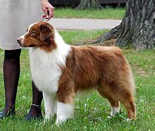 10 best big dog breeds for families babble pets 10 best big dog breeds for families