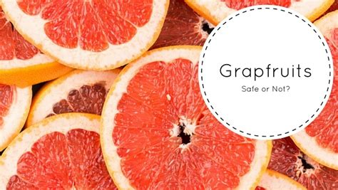 can dogs grapefruit can dogs grapefruit smart owners