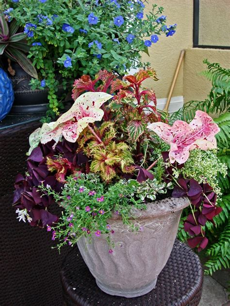 container gardening florida pin by port homebuilders on florida container