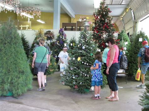 minnesota grown christmas trees at the mn state fair