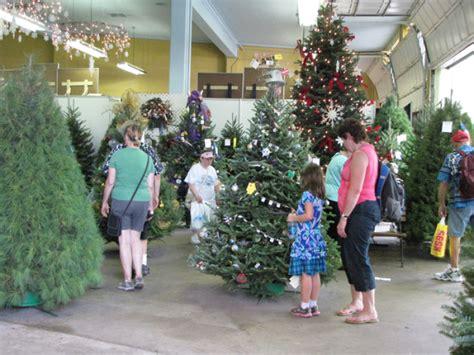 minnesota grown christmas trees at the mn state fair