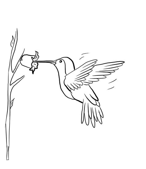 Free Printable Hummingbird Coloring Pages For