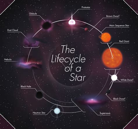 the life cycle of our sun the life cycle of a star