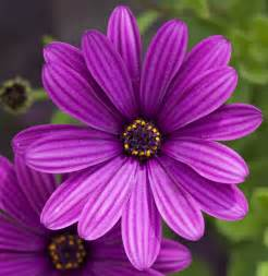file purple flower 4764445139 jpg