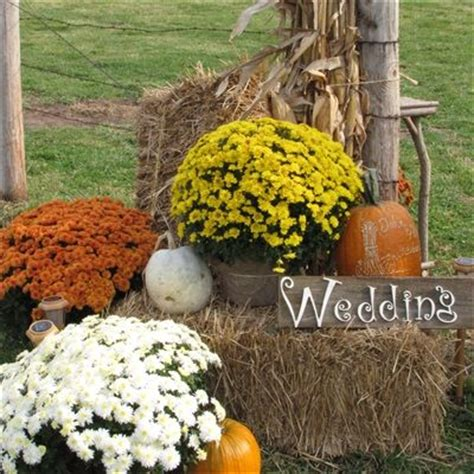Where To Buy Hay Bales For Decoration by 25 Best Ideas About Fall Wedding Mums On