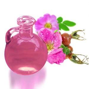 fiore della bellezza quot rosa mosquita quot il fiore della bellezza naturalworld