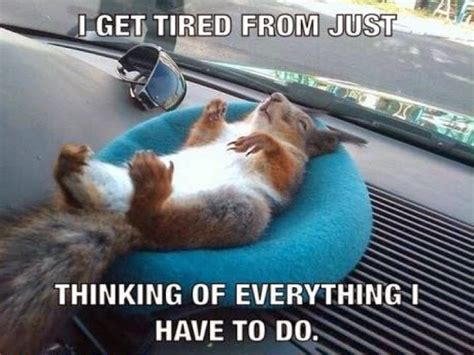 Dead Squirrel Meme - quotes 93 books and swoons bloglovin