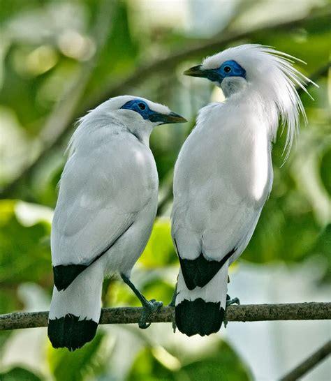 gambar hewan hewan langka di indonesia artikel bermanfaat