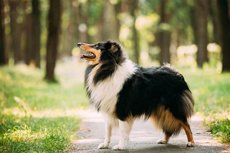 all famous dog names from tv movies politics books and dog names woofweekly dog names dog names woof