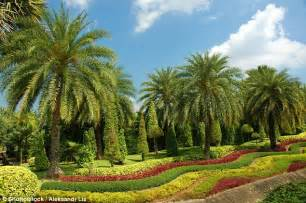 Brits Urged To Plant Palm Trees And Artificial Grass Palm Gardens Flowers