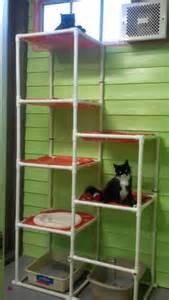 Barn Hours Austin Pets Alive Cat Trees Austin Pets Alive
