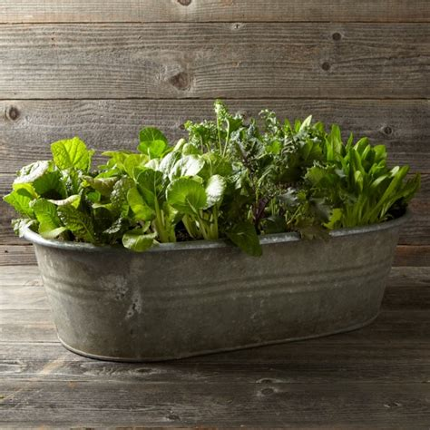 bathtub planters vintage galvanized bathtub planter williams sonoma