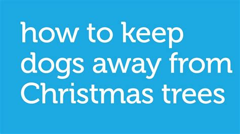 how to keep your dog away from the christmas tree by
