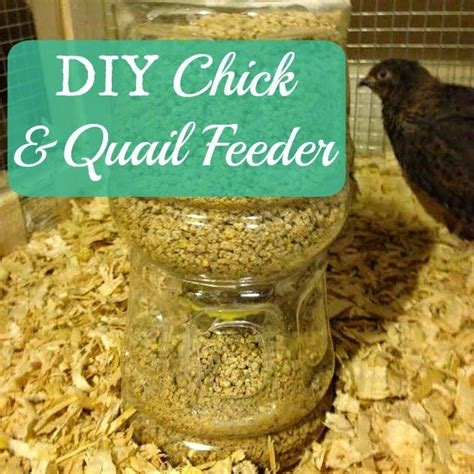 317 best quail images on pinterest quails chicken coops