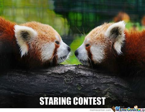 Red Panda Meme - red panda memes best collection of funny red panda pictures