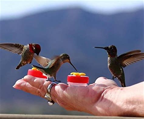 best hand held hummingbird feeders hummingbirds plus