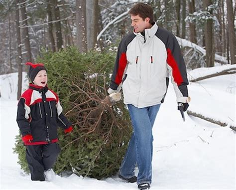 cut your own christmas tree at ridgefield farm orchard