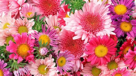bright colored flowers colorful bright colored flowers 2560x1600