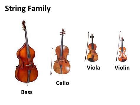 string section instruments instruments string family thinglink