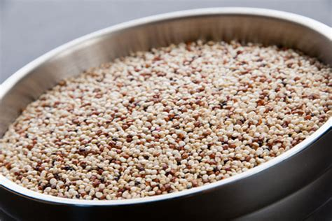 whole grains and legumes indian harvest whole grains rice and legumes