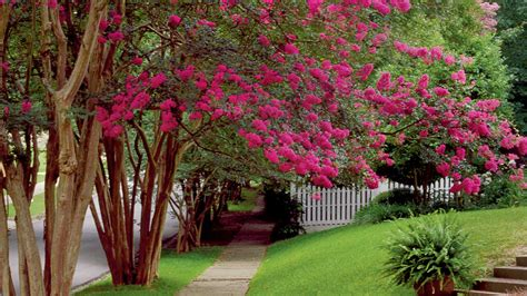 Home Decorating Style Names classic southern plants southern living