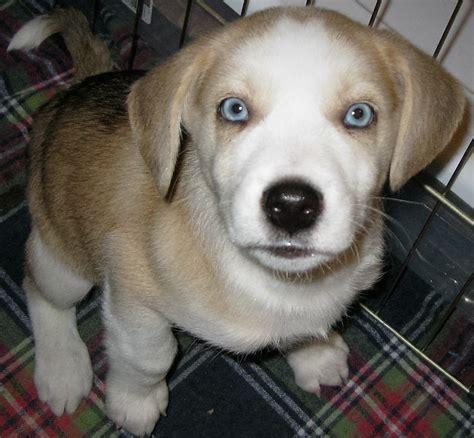 puppy rescue chicago meet milo chicagoland rescue