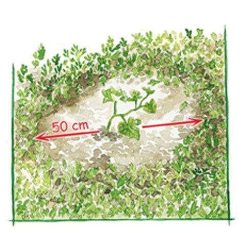 imagenes abonos verdes jardiner 237 a by davis jardineria by davis