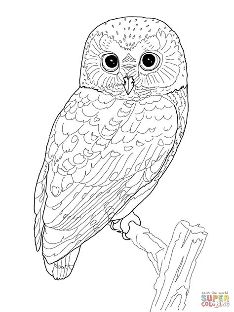 tawny owl coloring page northern saw whet owl coloring page free printable