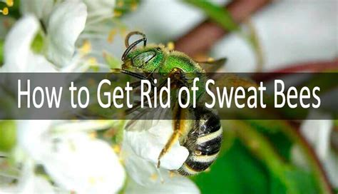 how to get rid of bees in house siding how to get rid of bees in my backyard how to get rid of bees in my backyard how to get