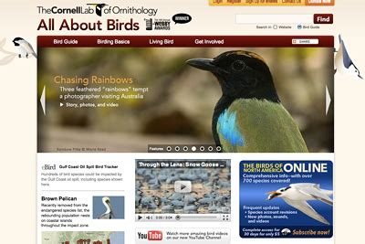 cornell bird watching website cu s all about birds website wins lifestyle webby award cornell chronicle